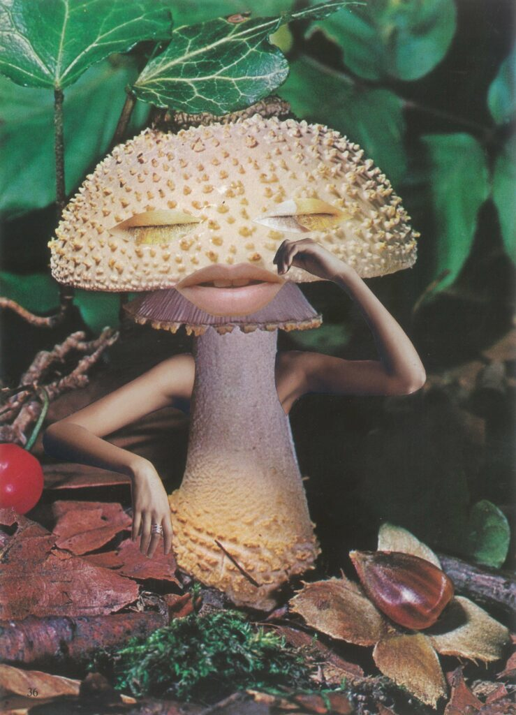 Seana Gavin-Mindful Mushroom-Somerset House-Francesca Gavin